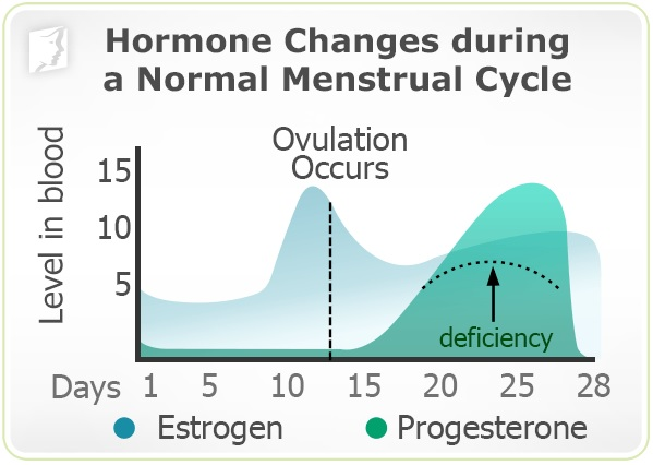 Hormone Changes